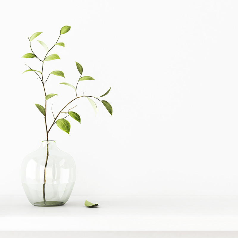 plant in vase - about lindsey m. henke